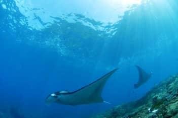 Bali diving Nusa Penida